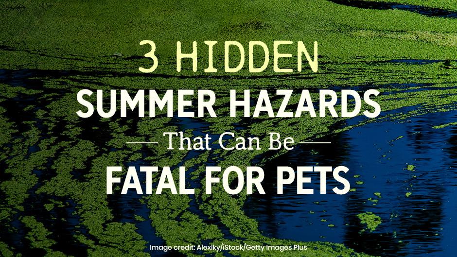 3 Hidden Summer Hazards That Can Be Fatal for Pets