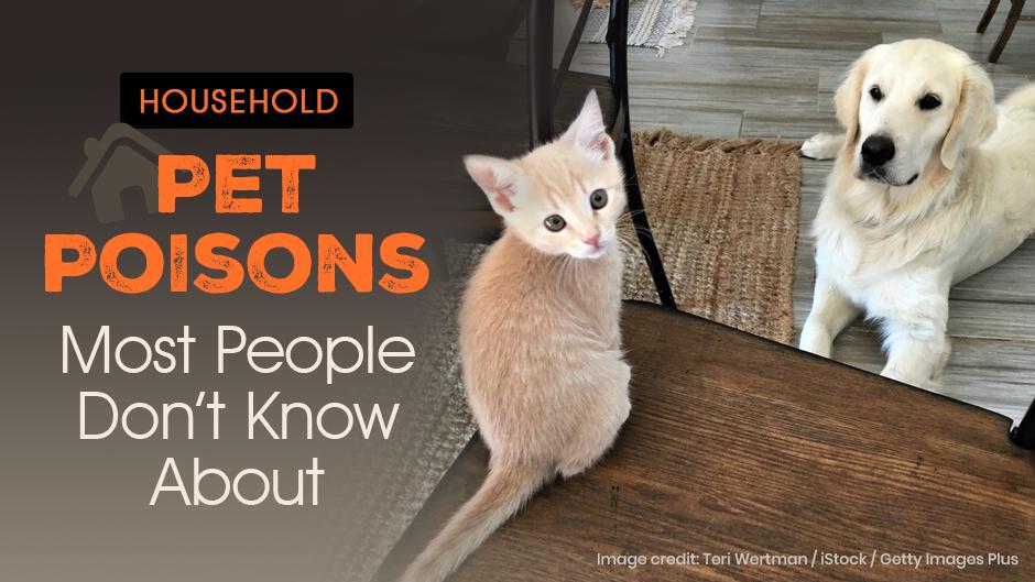 Pet Poisons