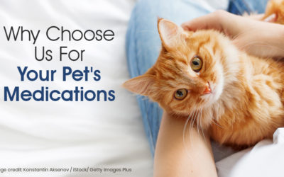 Why Choose Us For Your Pet's Medication