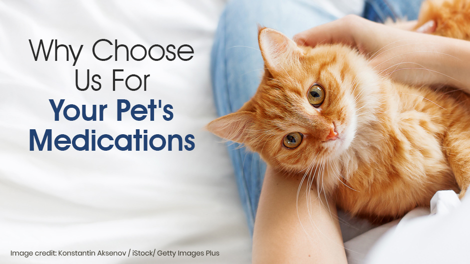 Your Pet's Medications
