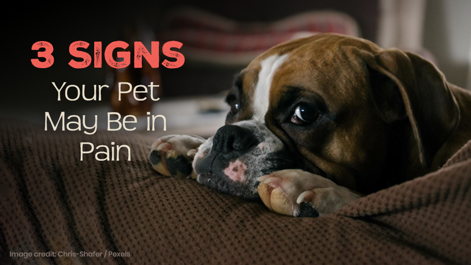 3 Signs of Animal Pain